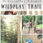 WildPlay at Whinlatter Forest