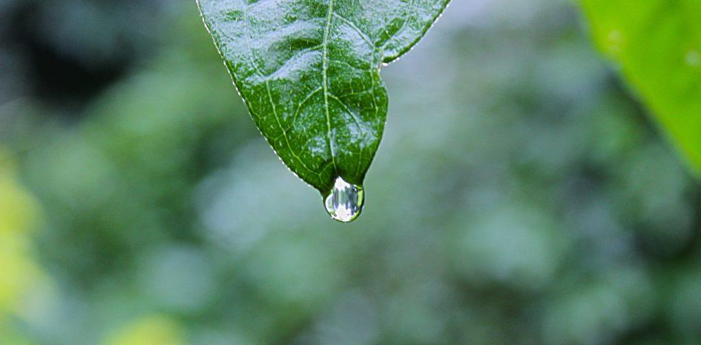 nature-plant-leaf-rain (1)