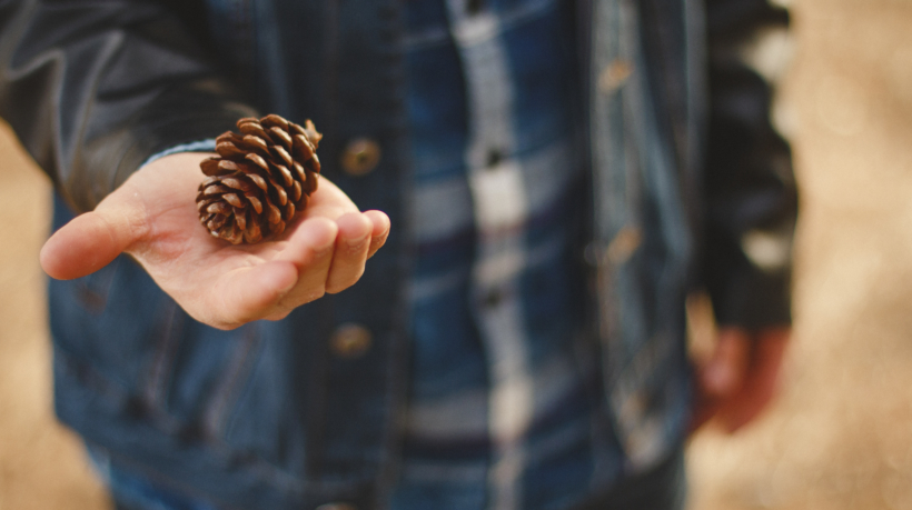 boy with pinecone