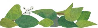 leaves spray